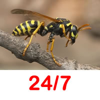 Masshouse Wasp Contrtol 24/7