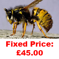 Wasp Nest Treatment Masshouse Fixed Price £45.00.