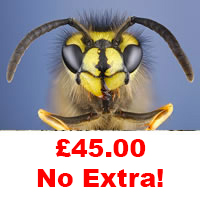 Stockland Green Wasp Control £45.00 No Extra.
