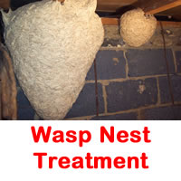 Wasp Nest Treatment Pest control
